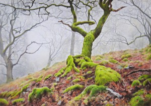 England - oak at Glencoyne, Cumbria