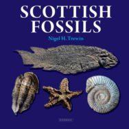 Scottish Fossils image
