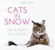 Cats in Snow: The Ultimate Collection image