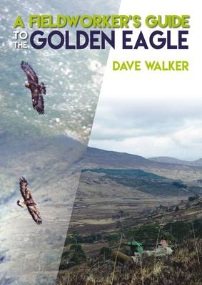 Golden Eagle Spotting With Dave Walker