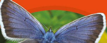 i-SPY Butterflies and Moths