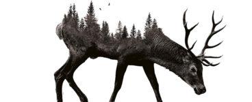David Robinson Reviews: Pine