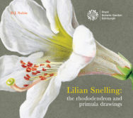 Lilian Snelling: the rododendron and primula drawings - cover image
