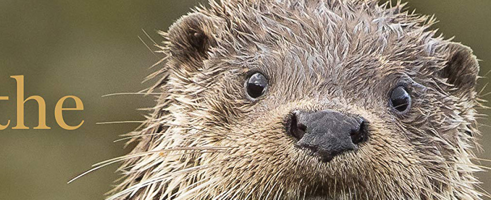 The Secret Life of Otters